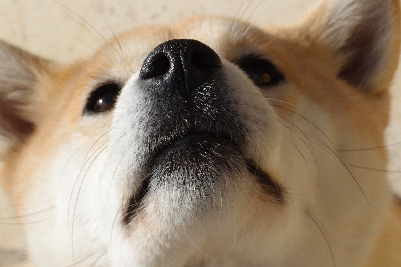 Would Dogecoin survive if someone tried to attack it