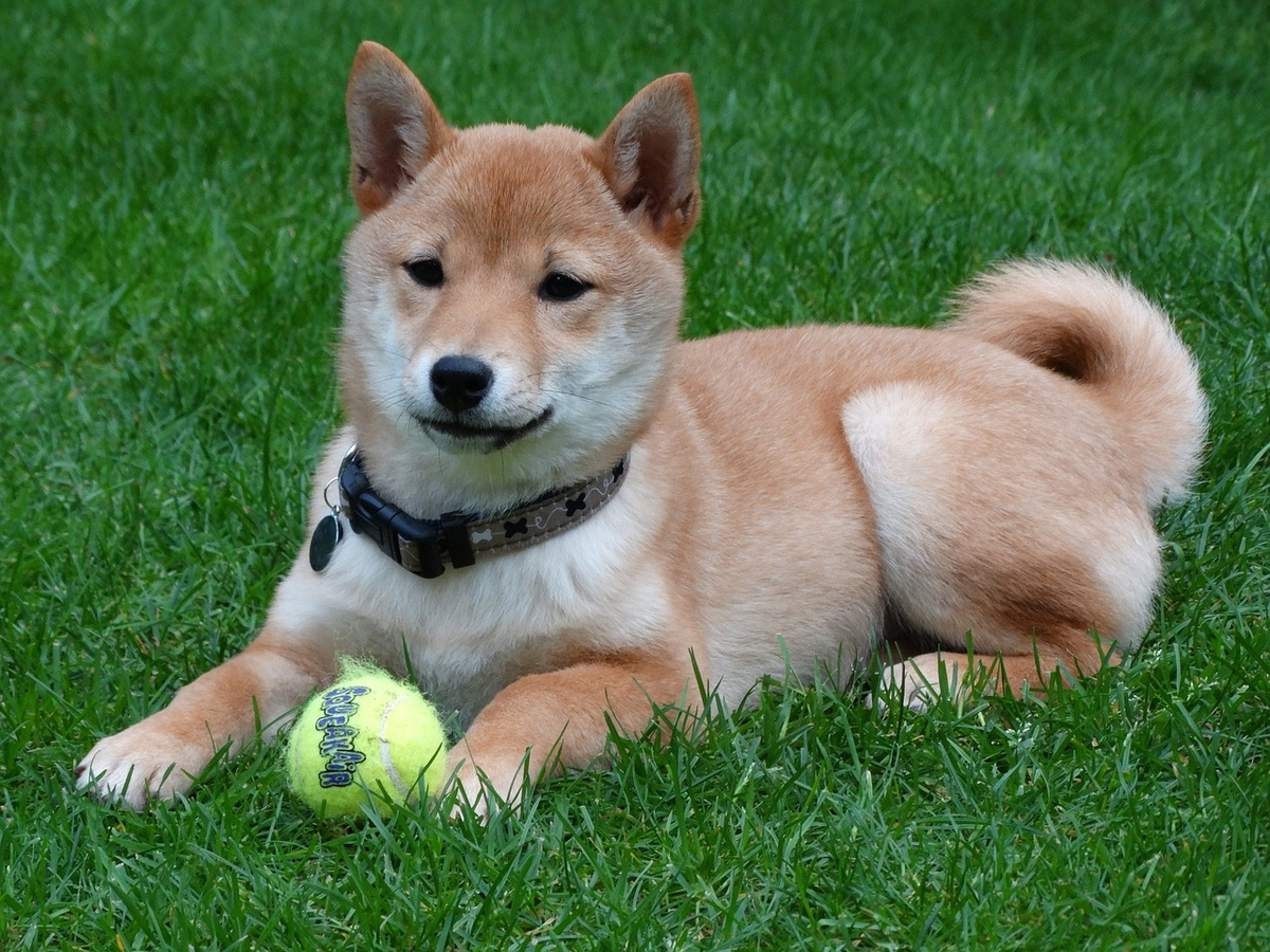 For a trader, is Shiba Inu [SHIB] still worth counting on