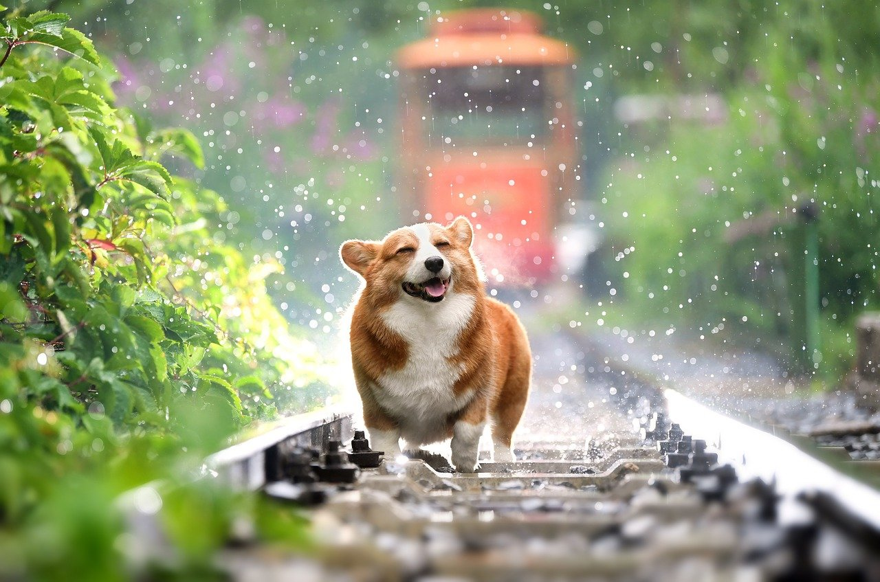 A close above this could trigger the next Dogecoin rally