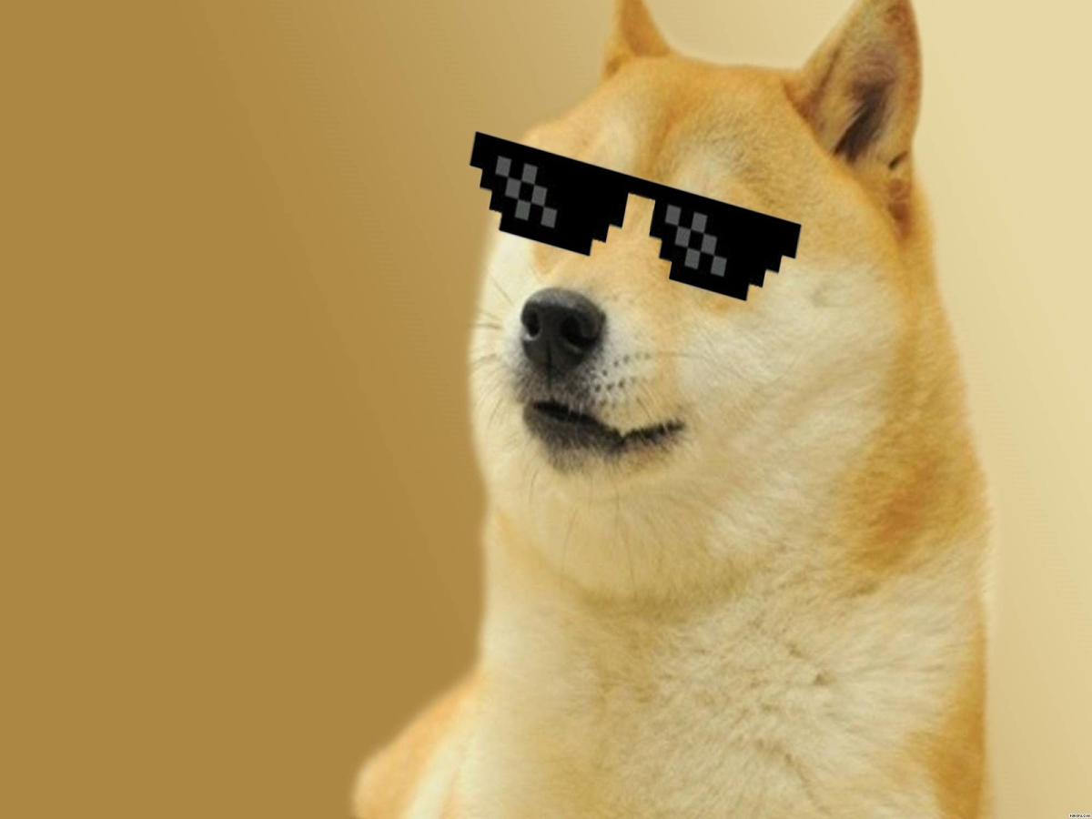 What is the well-known secret about DOGE holders