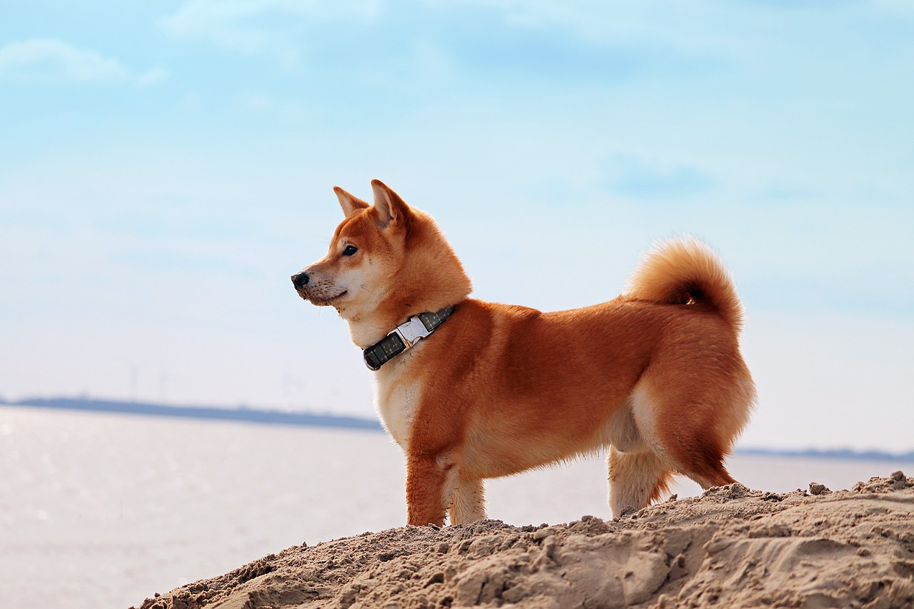 Why this can be an ideal opportunity to buy Dogecoin